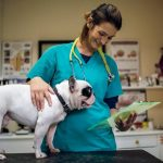 Things to know about vet hospitals